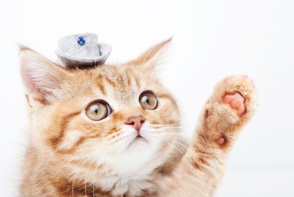 猫 受験 癒し