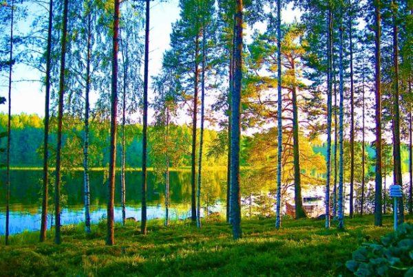 フィンランド 日本 勉強
