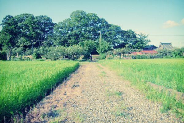 田舎 勉強