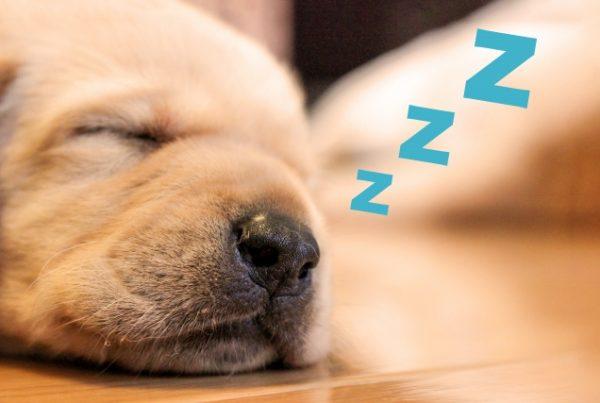 受験生 睡眠